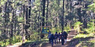 Redoblarán la preservación de bosques en la entidad
