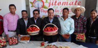 Aumenta a 450 toneladas el cultivo de jitomate saladet
