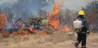 Llama Semarnath a prevenir incendios forestales