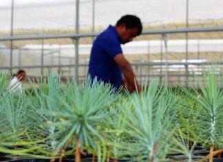 Certifica Conafor once viveros forestales