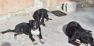 Refugios de mascotas deben operar conforme a reglamento