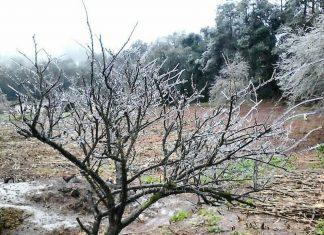Confirman cinco municipios con presencia de nieve
