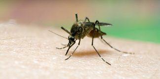 Pide IMSS a población tomar medidas para prevenir paludismo