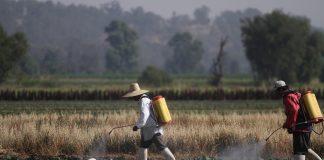 Planean mayores apoyospara campesinos sin tierra
