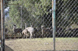 Fortalecen Corredor Biológico del Puma, en Actopan